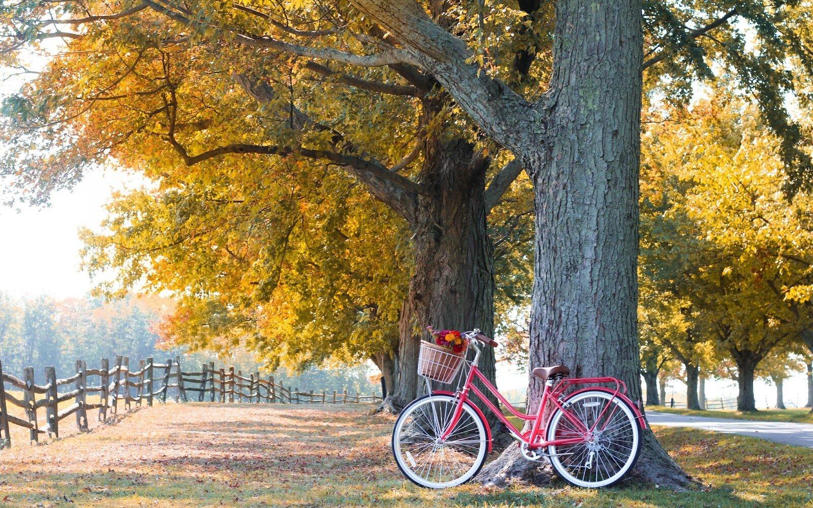5 - Reid ® - Ladies Classic 7-Speed Bike