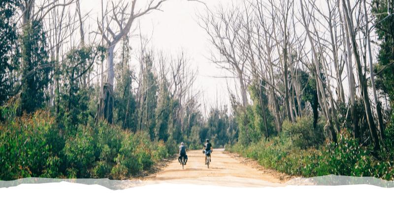 Trees Single Image 2 - Reid ® - Landmark achievement - 100,000 trees planted!